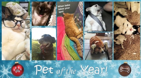 pet of the year