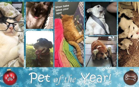Pet of the Year 2016