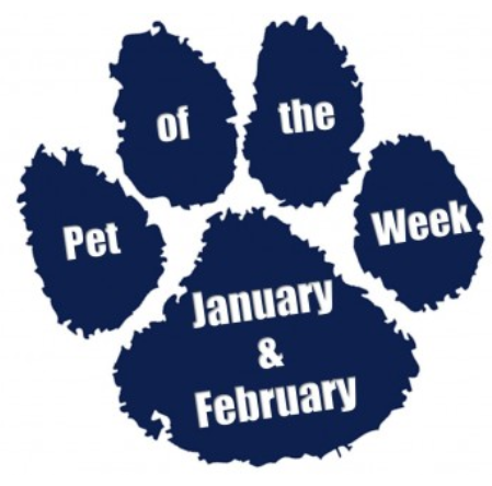 pet of the week janfeb skinny