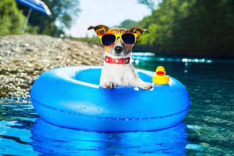 Dog-Tips-And-Tricks-For-Summer-Picture-01