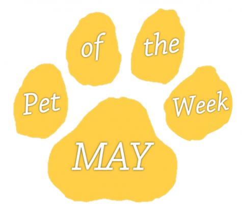 pet of the week may