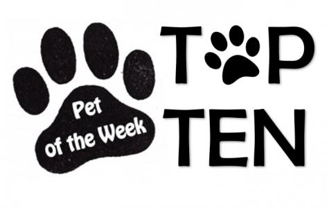 Pet of the Week Top Ten