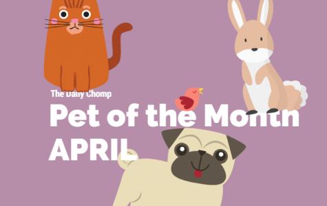 Pet of the Month: April