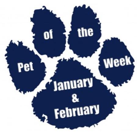 pet of the week janfeb skinny