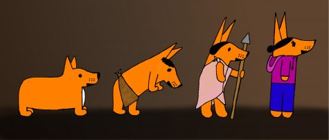 The evolution of Corgis!