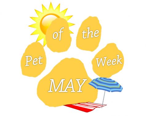 Pet of the Month: April