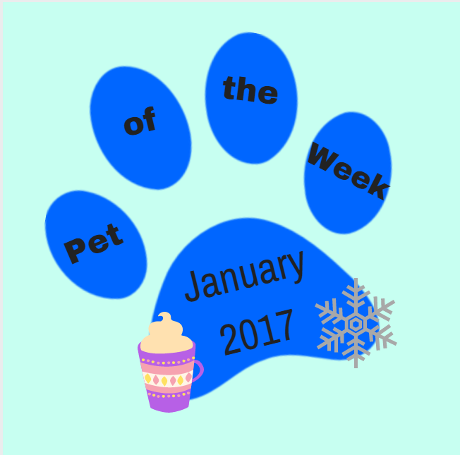 Pet of the Week: January 23