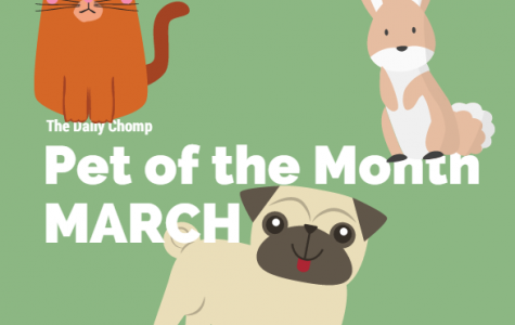 Pet of the Month: March