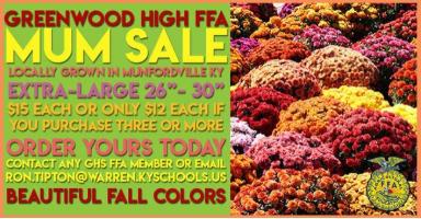 FFA Mum Sale Coming to Greenwood