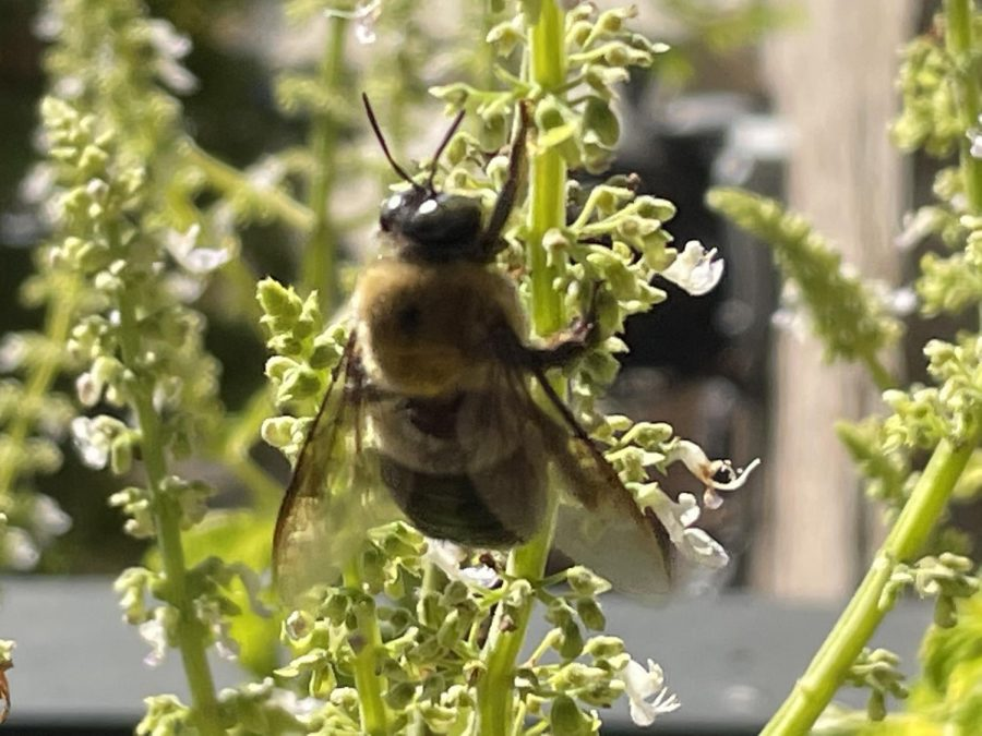 Whats The Buzz About Bees?